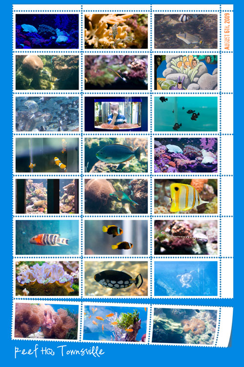 Reef-collage-8_12web