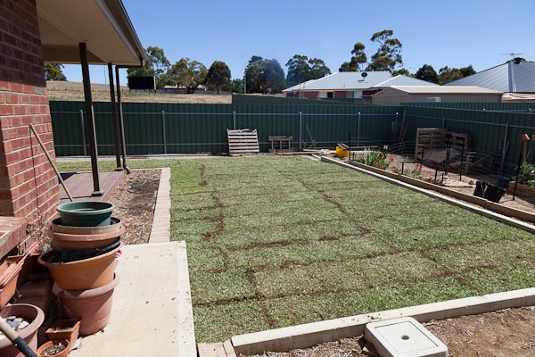 All finished! The brown lines are extra top soil brushed into the cracks. They disappeared with a good watering in.